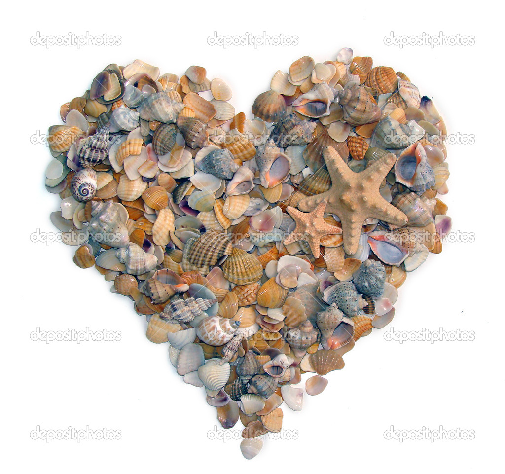 Heart form cockleshells