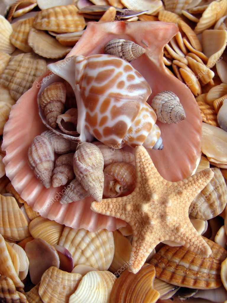 Cockleshells and starfish