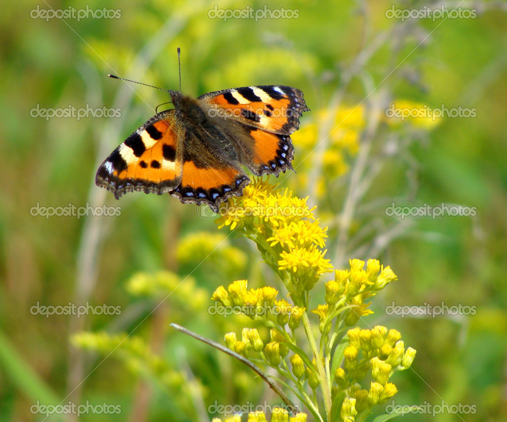 Butterfly against flowers