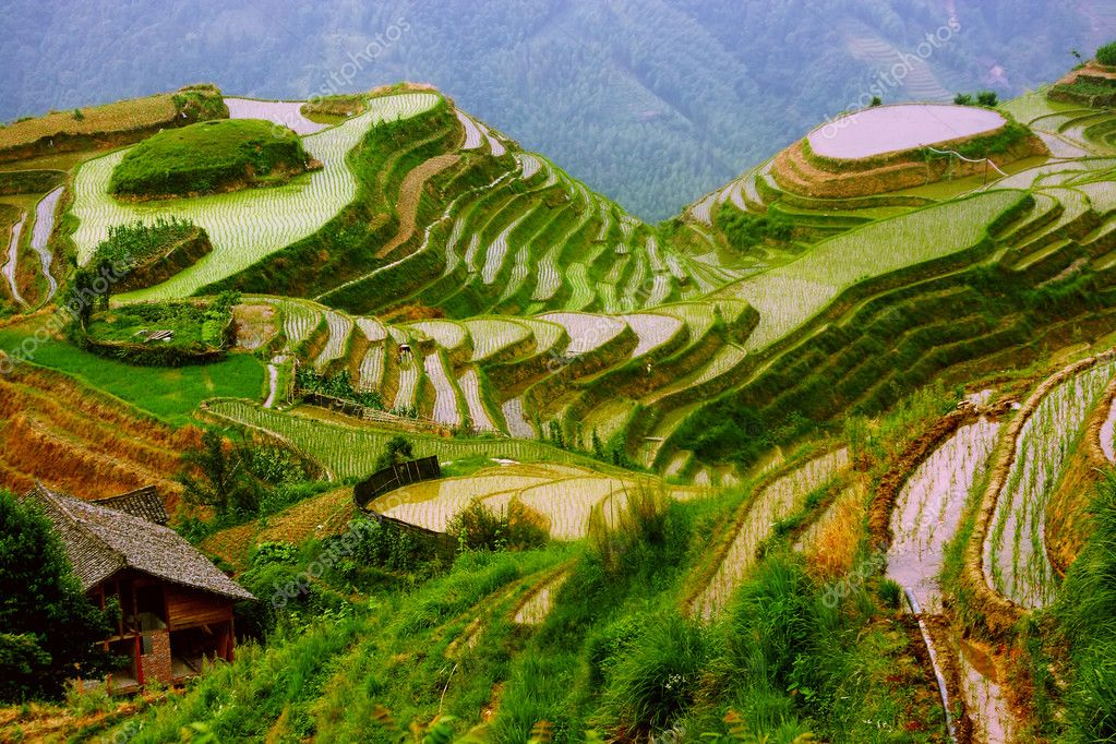 Rice terraces in mounting of Yunnan,