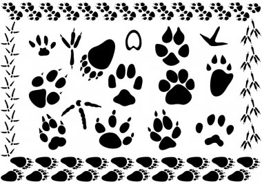 Animal and bird footsteps vector