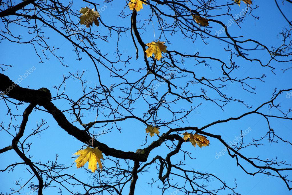 branche d 39 arbre automne contre le ciel photographie olga18x27 1392767. Black Bedroom Furniture Sets. Home Design Ideas