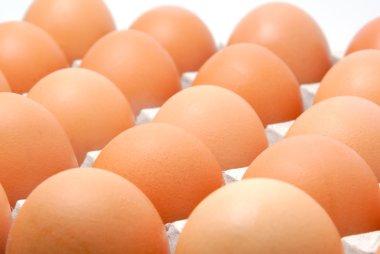Eggs in cardboard packing