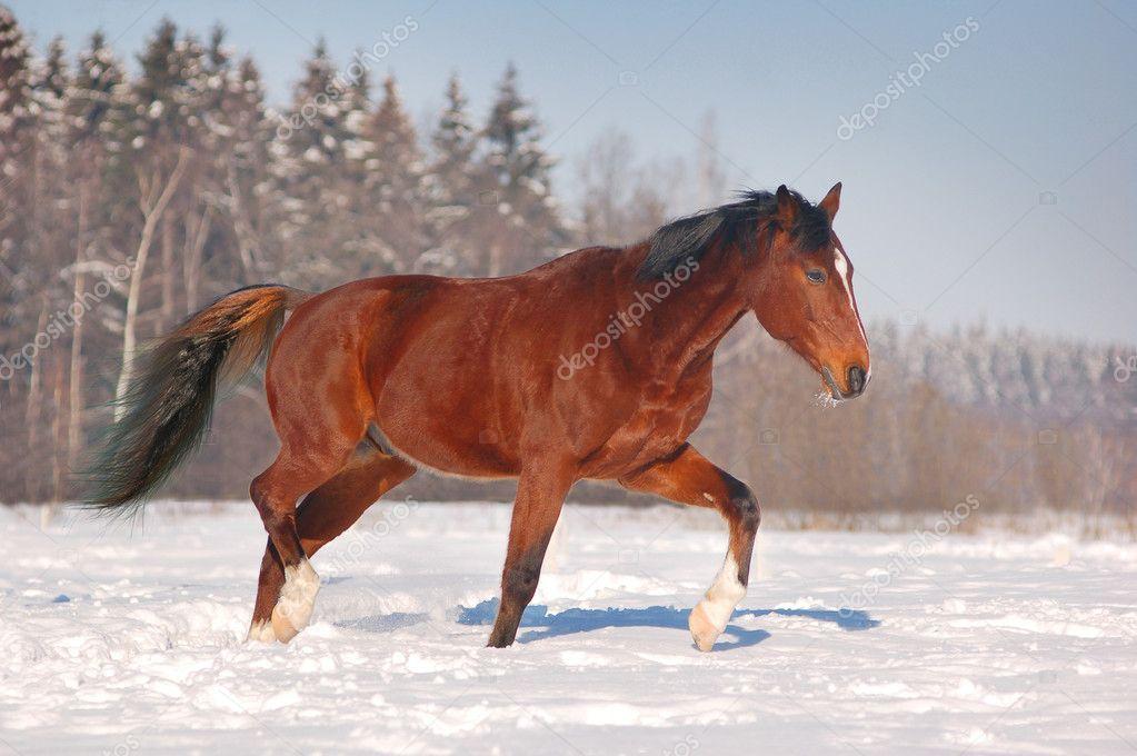 Cavallo Gratis Sfondo Invernale Foto Stock Olenka 2234338