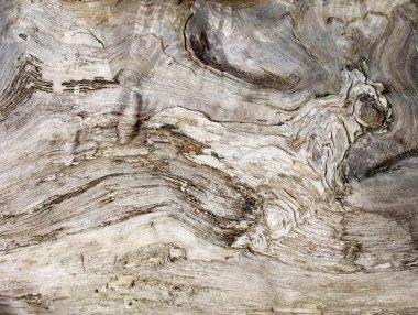 "Картина, постер, плакат, фотообои ""текстура старого дерева постеры цветы фотографии природа"", артикул 1301234"