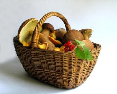 Basket full of mushrooms and berries