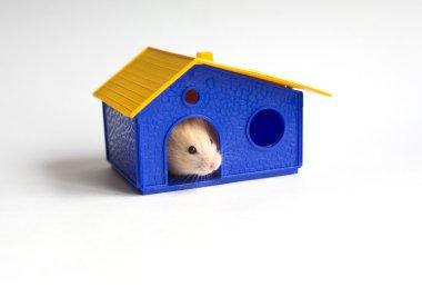Small homeowner