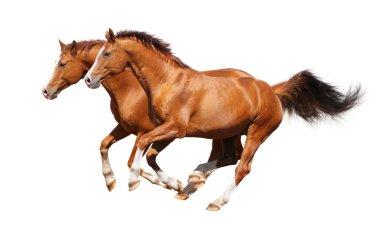 Two sorrel horses