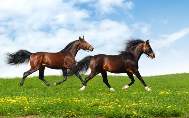 Two stallions trot - realistic photomontage stock vector