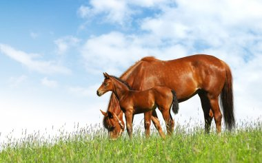Mare and foal in a field