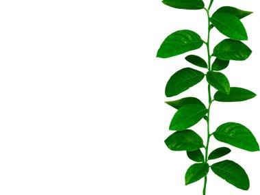 Lemon tree leaves ribbon