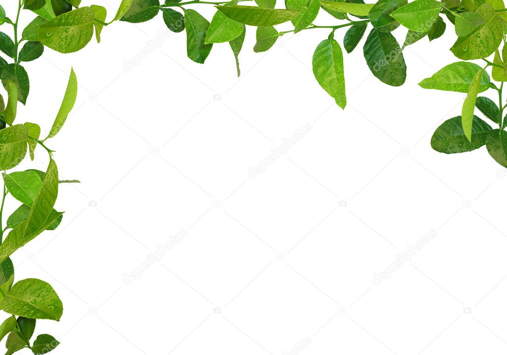 depositphotos_1231425 stock photo green leaves frame
