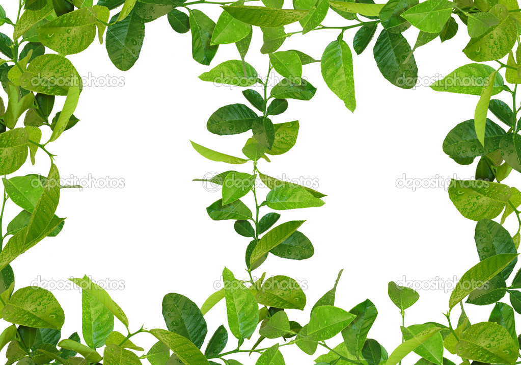 Green leaves frames — Stock Photo © vkraskouski #1240297