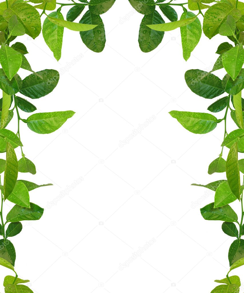 Marco de hojas verdes avai im genes similares fotos de - Marcos para plantas ...