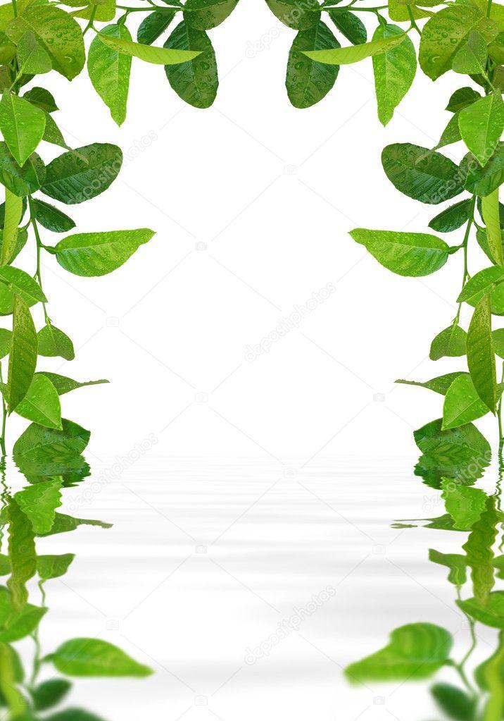 marco de hojas verdes en el agua — Fotos de Stock © vkraskouski #1655666