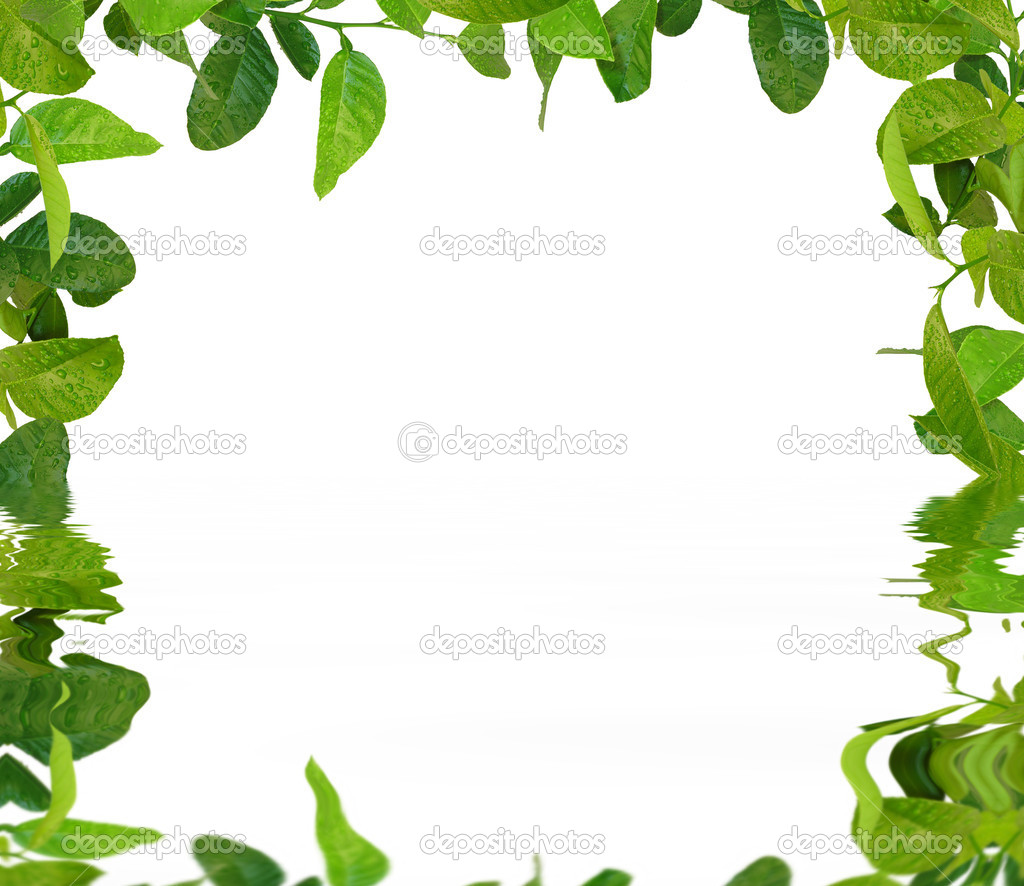 Marco de hojas verdes en el agua fotos de stock - Marcos para plantas ...