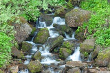 Small wood falls. summer landscape