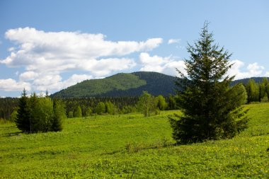 Summer landscape. Ural mountains