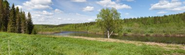 Lonely birch on the bank of river