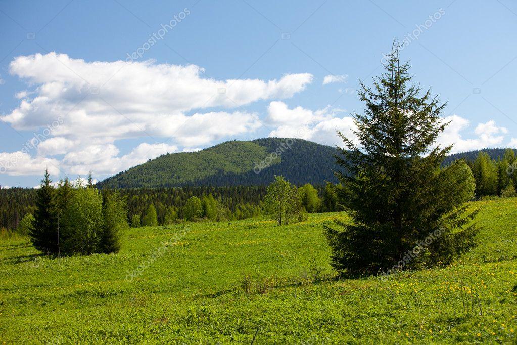 Summer landscape. Ural mountains