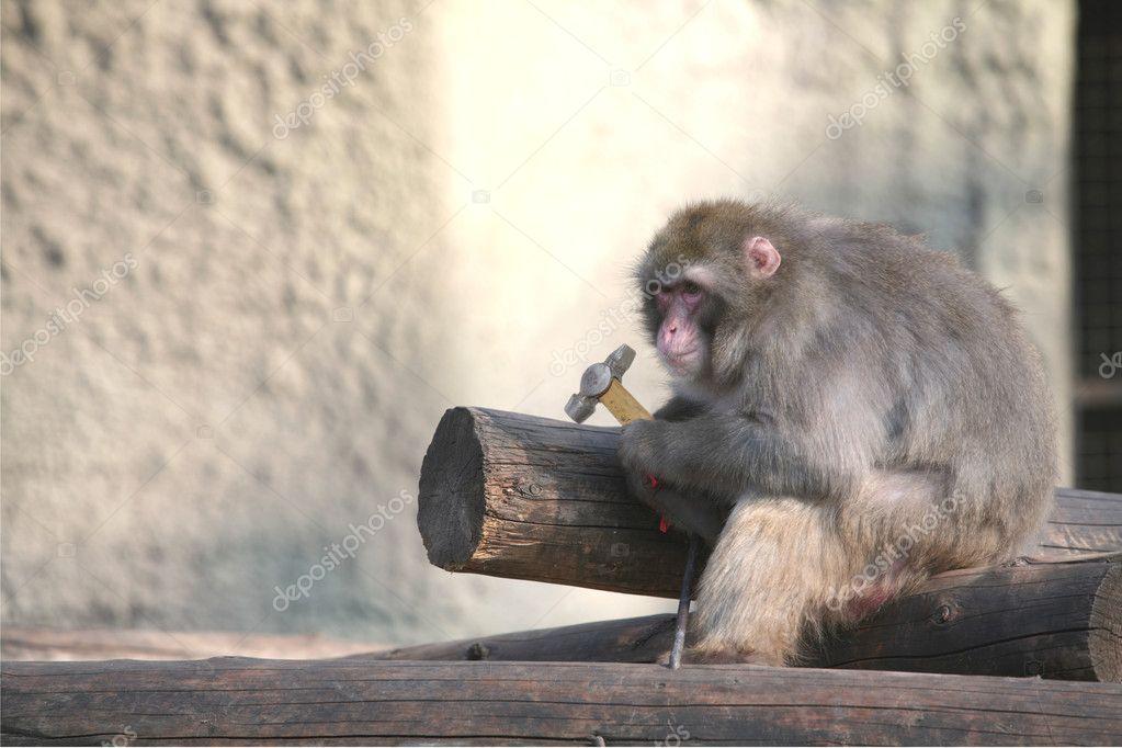Ape on Construction, Monkey