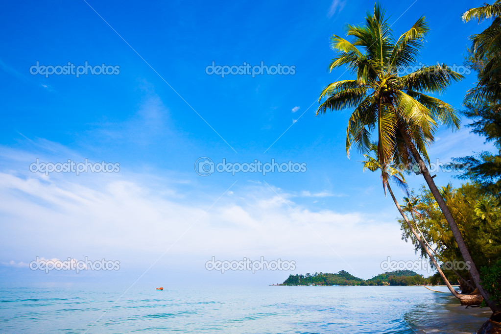 Coconut palms on tropic coast