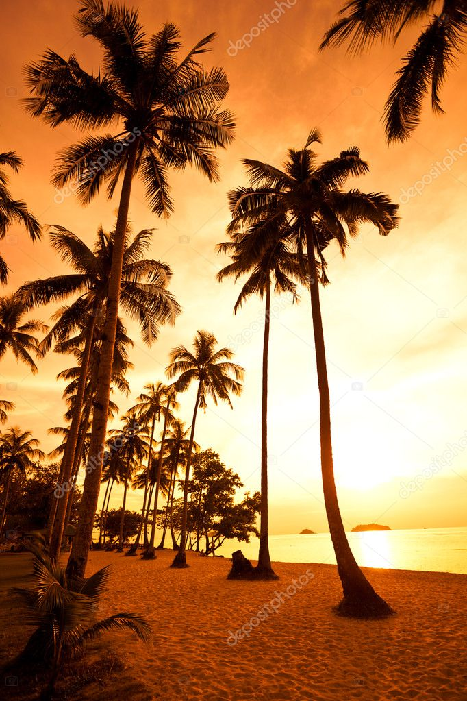 Coconut palms on sand beach in tropic on