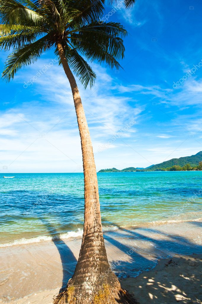 Coconut palm on sand beach in tropic
