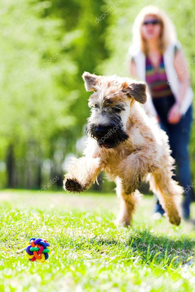 Running dog on green grass