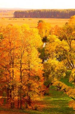 Orange autumn park