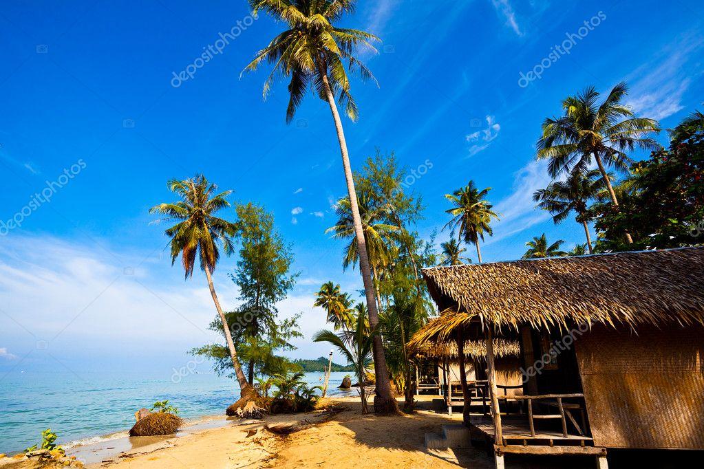Coconut palms on tropic coast