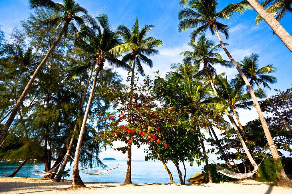 Straw hammocks on palms