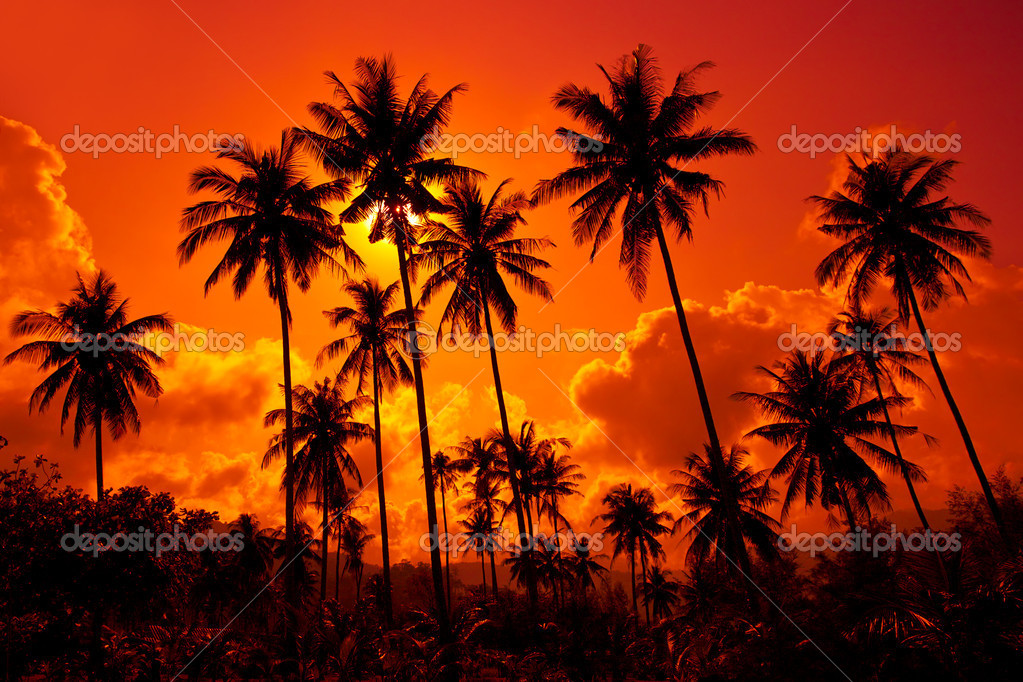 Coconut palms on sand beach