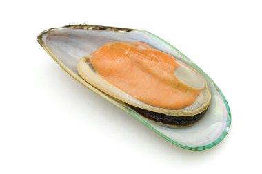Half of green mussel