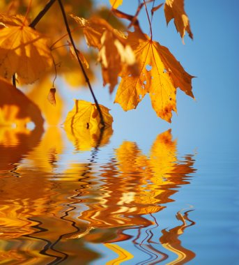 Autumn leaves against blue sky with reflection on water stock vector