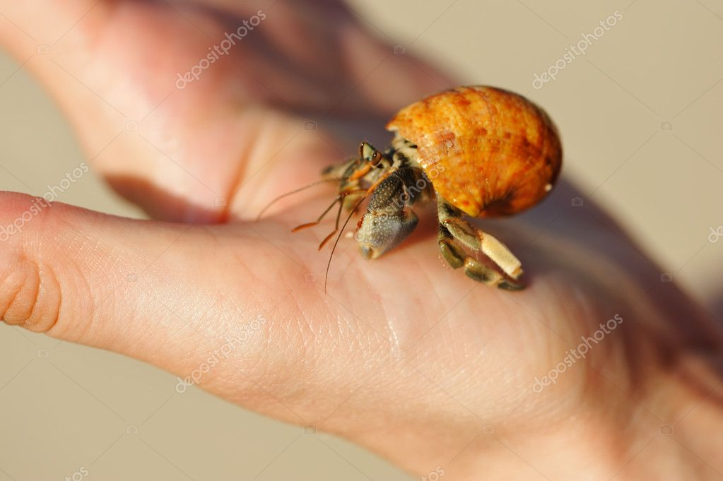 Hermit Crab in a hand