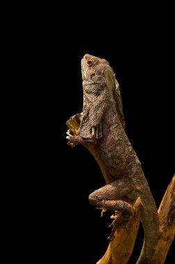 Lizard on a tree