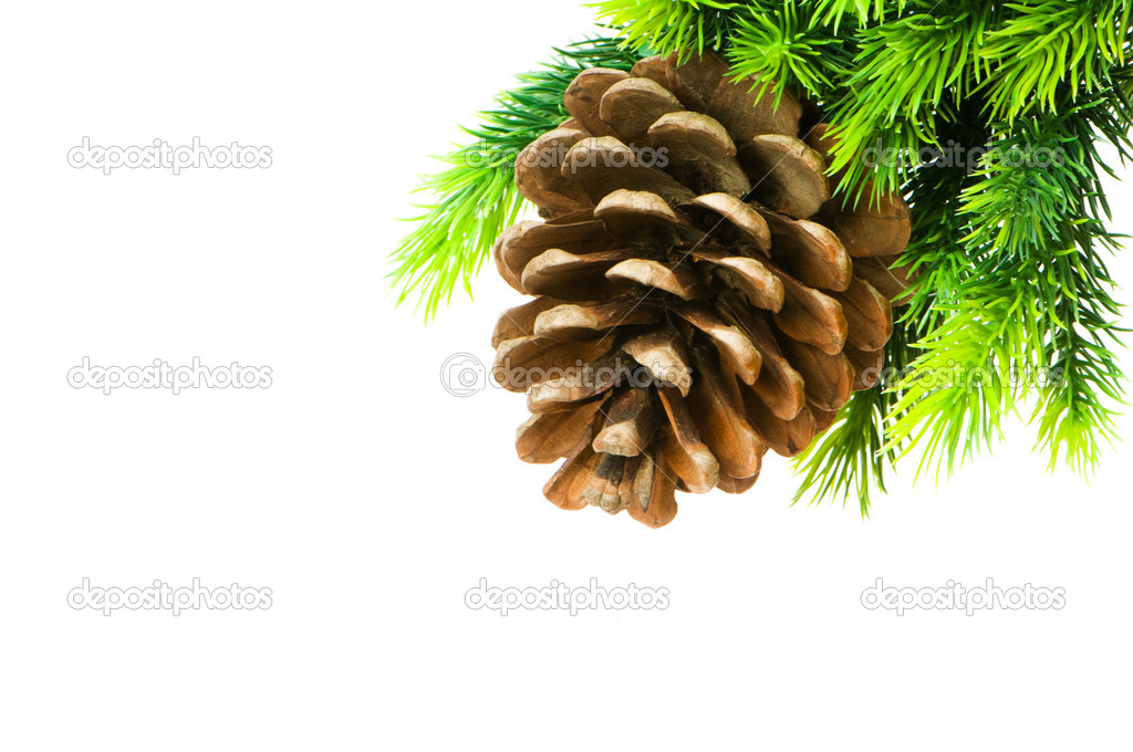 Cone and christmas tree isolated