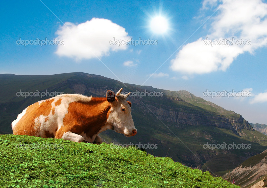 Cow grazing on green grass