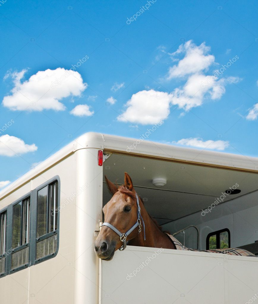 Horse in the van on bright day