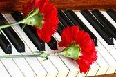 romantisches Konzept - Nelke auf dem Klavier