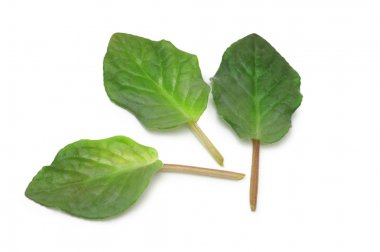 Selection of various green leaves