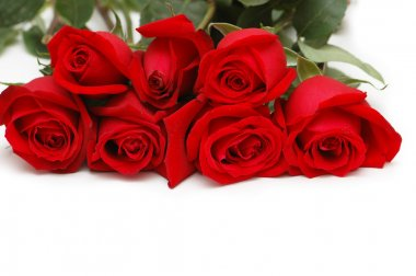 Bunch of red roses isolated