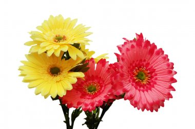 Pink and yellow flowers isolated