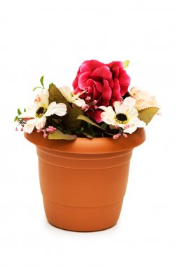 Various flowers in the pot isolated