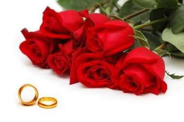 Red roses and rings isolated