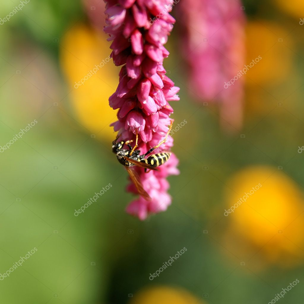 Wasp on the flower