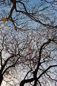 Spitze eines Baumes