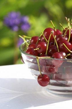 Cherry still life