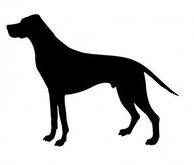 Silhouette beagle